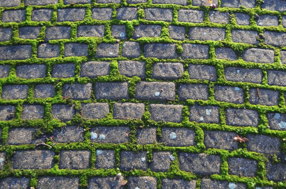 Textured bricks with moss growth