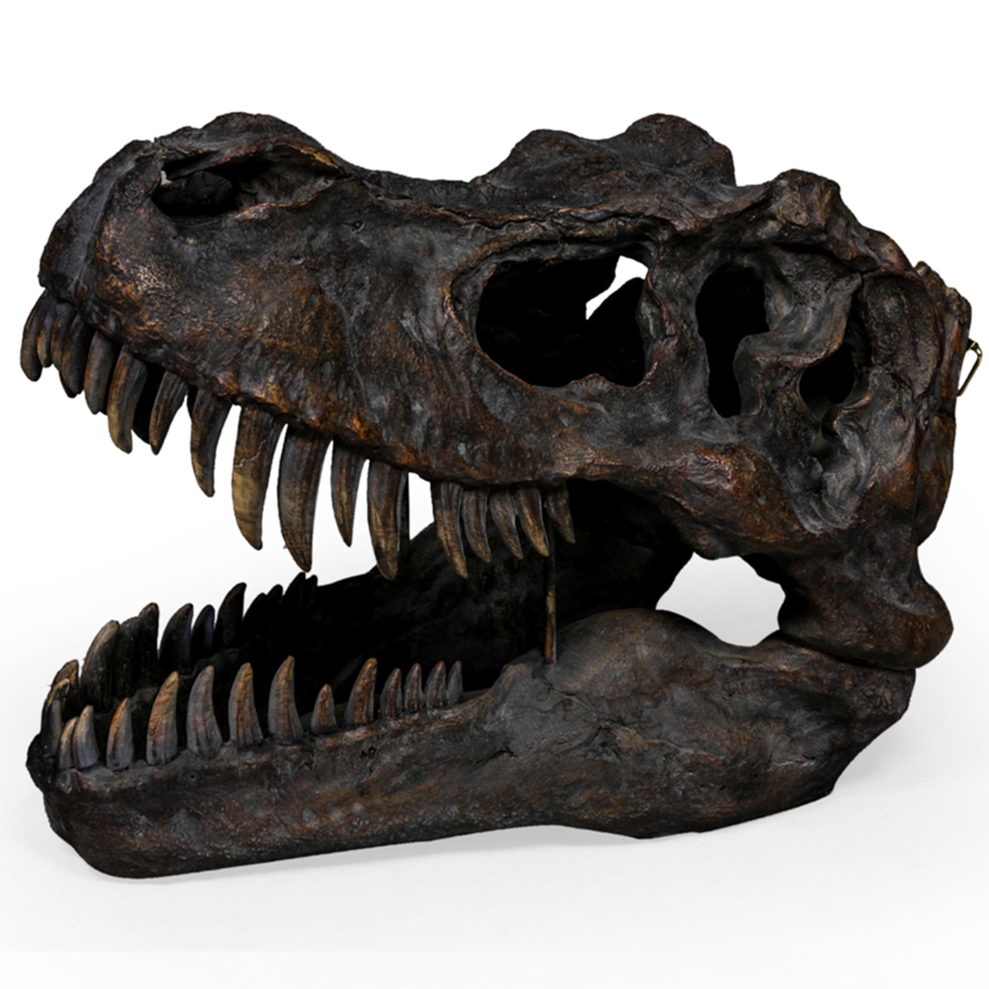 Large Tyrannosaurus Dinosaur Skull Wall Head Accessories