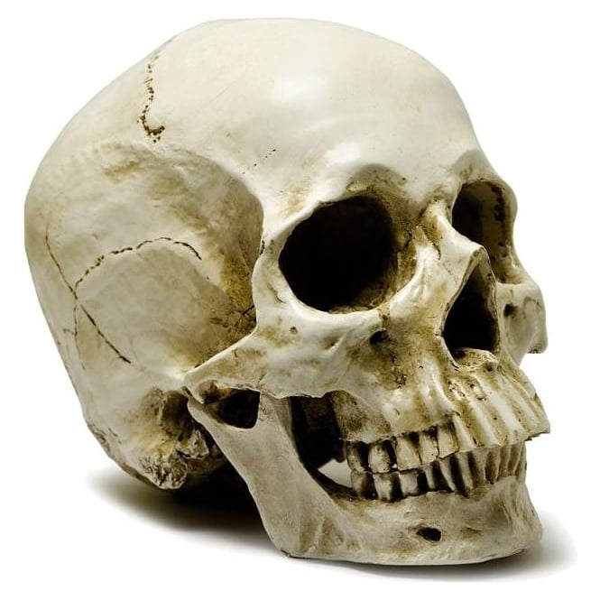 Life Like Human Skull Ornament