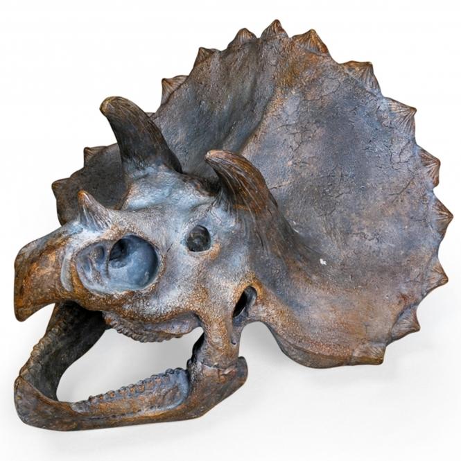 Triceratops Dinosaur Skull Wall Head Home Accessories