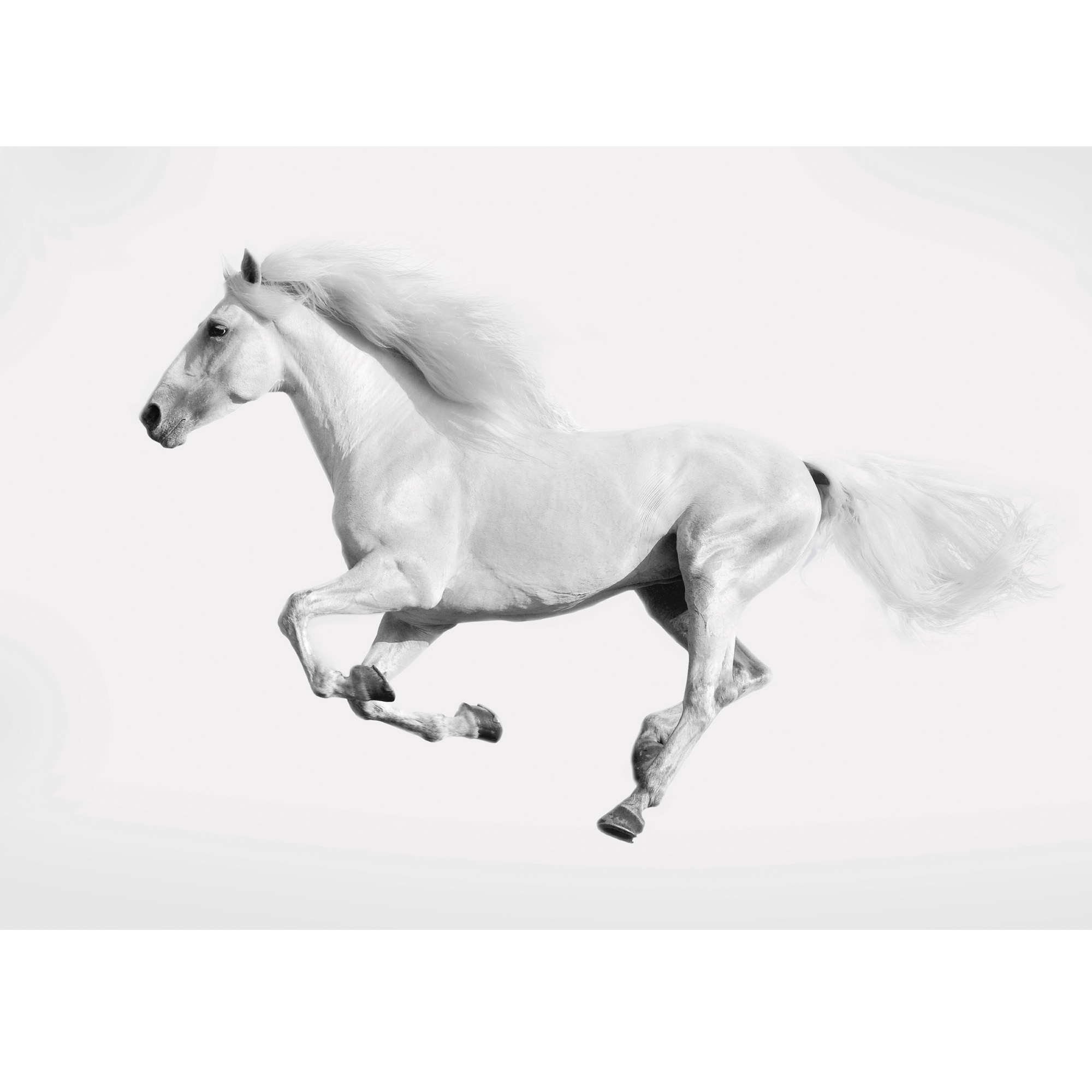White Running Horse Glass Art Contemporary Art Homesdirect365